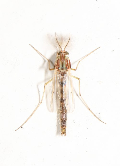 Blind mosquitoes: Not much recourse but to swat away the swarming pests