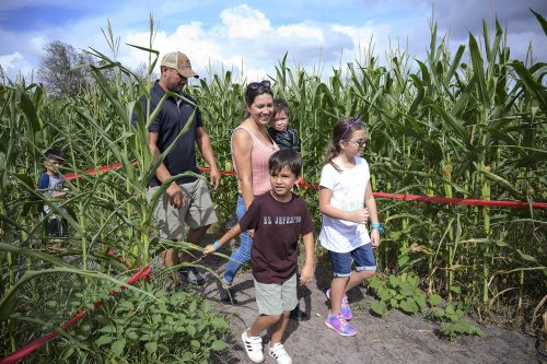 Long and Scott Farms unveils health-themed corn maze